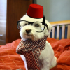 Fezzdog